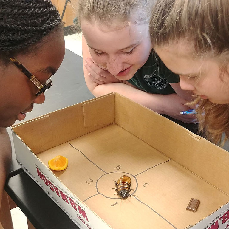 Giant cockroaches and mealworms: MS students apply entomology in the classroom