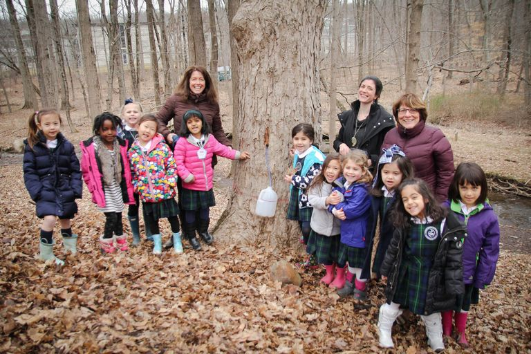STEM at Stuart: [VIDEO] Kindergarteners go maple tapping in our own backyard!